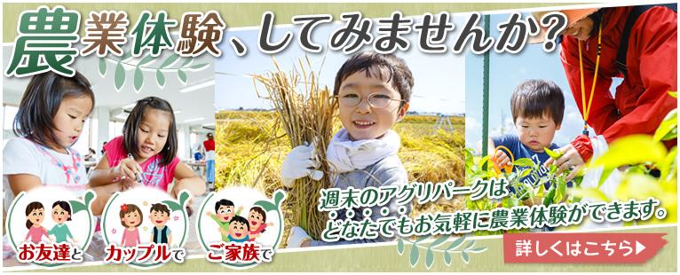 農業体験、してみませんか?